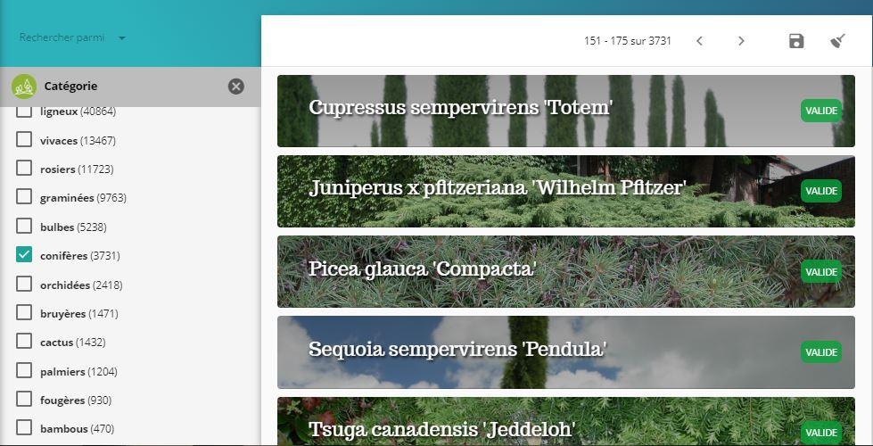 Capture-recherche-categorie-coniferes