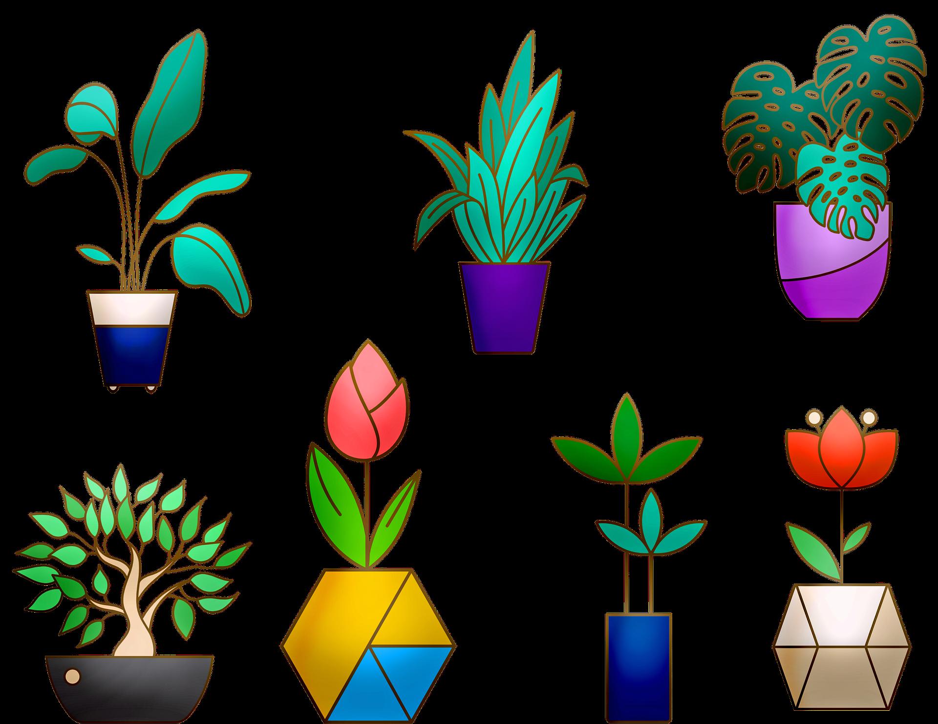 house-plants-4116992_1920